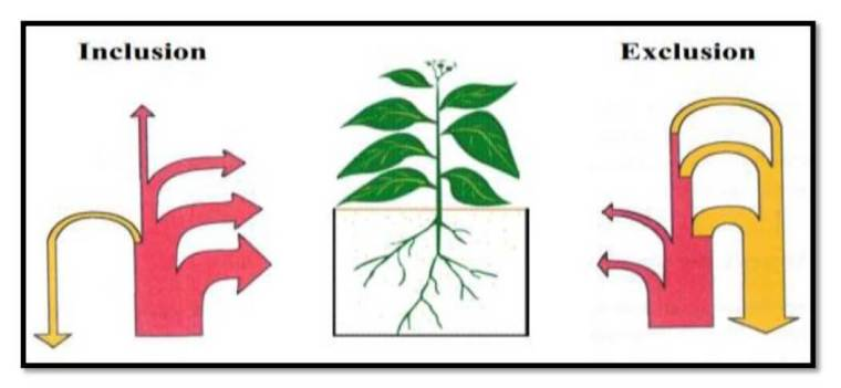 صورة 10: آلية توزيع و طرد الأيونات عند النبات