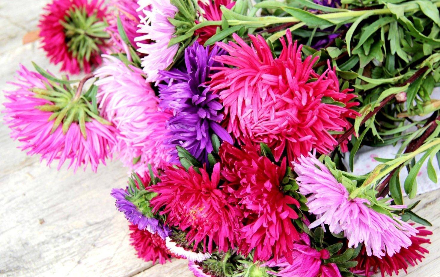 Марта пожеланиями, цветы осени картинки на рабочий стол