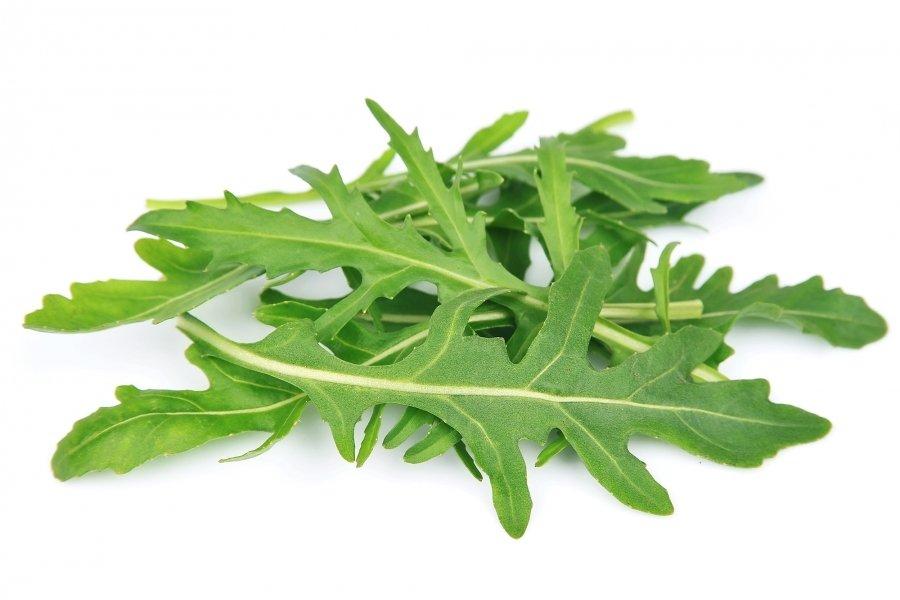 Weiße Eruca Sativa verlieren Gewicht