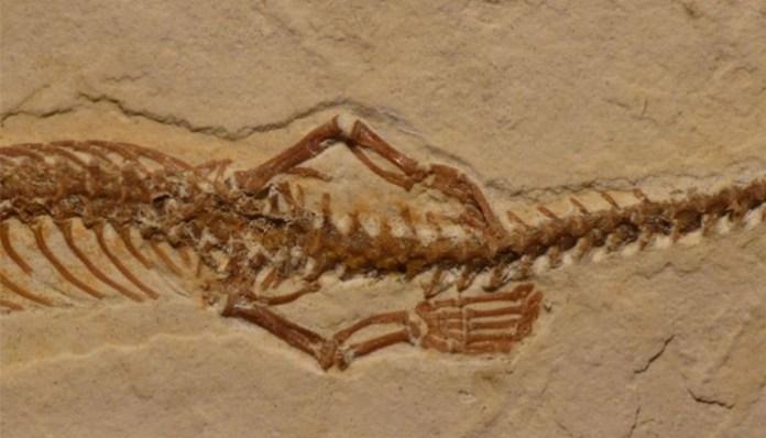 Fósil encontrado en Brasil serpiente con patas
