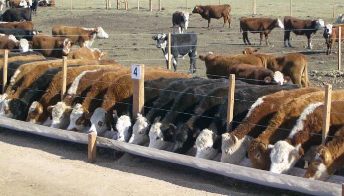 comederos para los bovinos