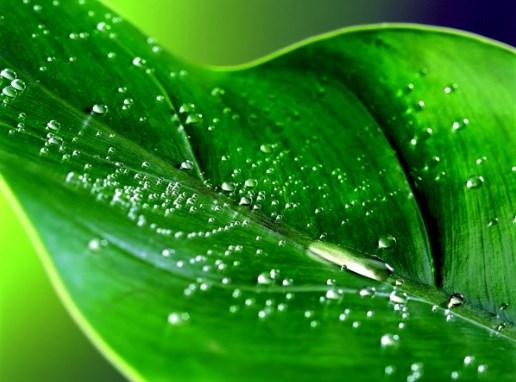 perder agua por transpiración