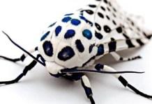 insectos extraños