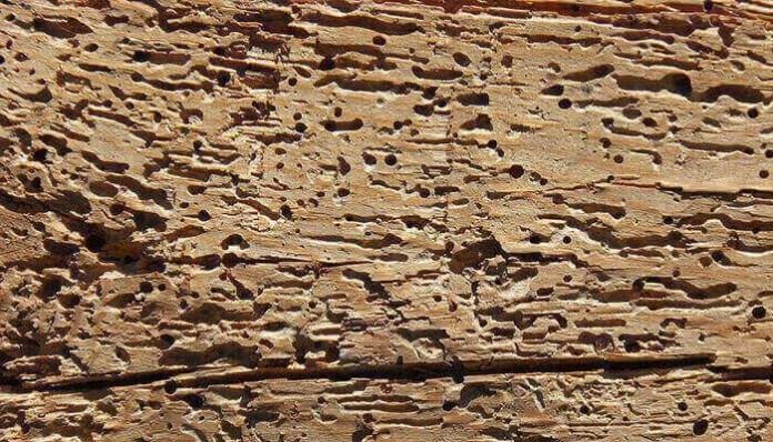 Madera afectada por insectos