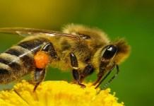 insectos mas mortales y peligrosos del mundo
