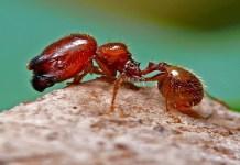 insectos mortales