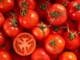 manejo agronomico del tomate