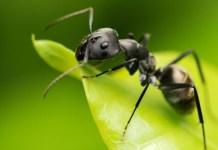 Tipos de hormigas en España