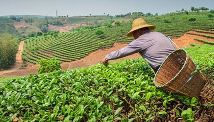 ¿Cómo surgió la agricultura y la ganadería?