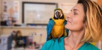 centro de recuperación de aves