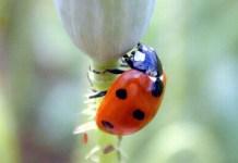 Control Biológico de Plagas Agrícolas