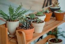 plantas que absorben malas energías