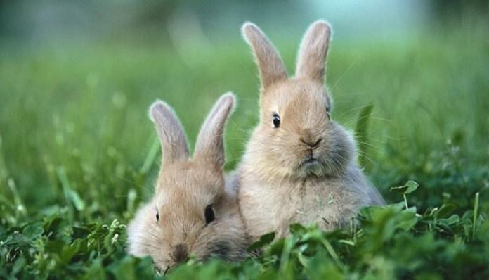 hábitat de un conejo