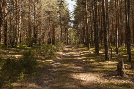 Você sabe quais são as principais fontes de erro em inventários florestais?