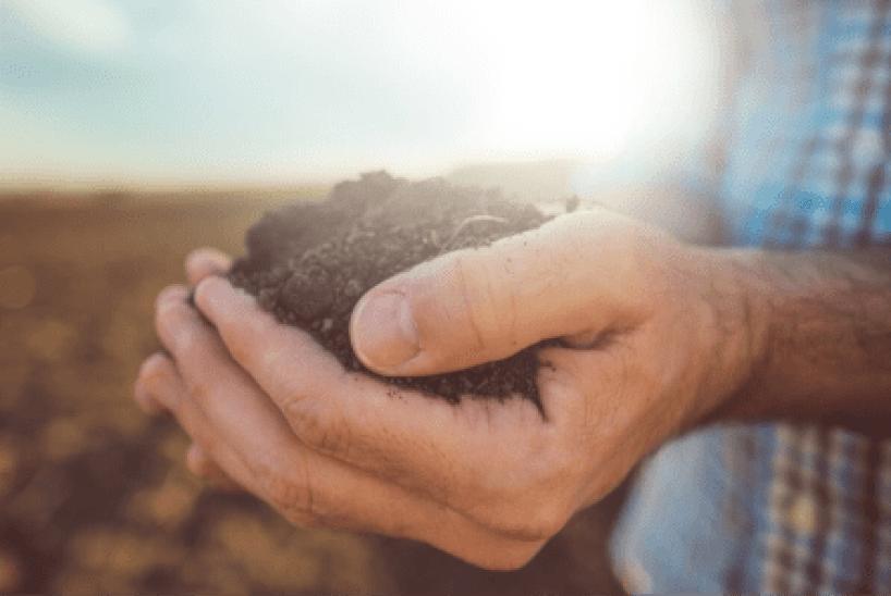 Fertilidade do solo: 3 passos para seguir
