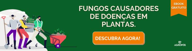 Fungos causadores de doenças em plantas.