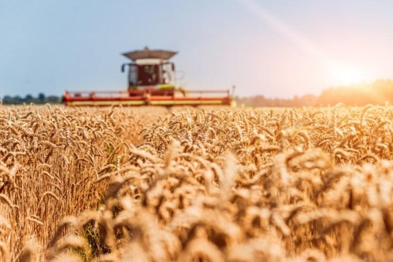 Caraterística da matéria-prima do agronegócio