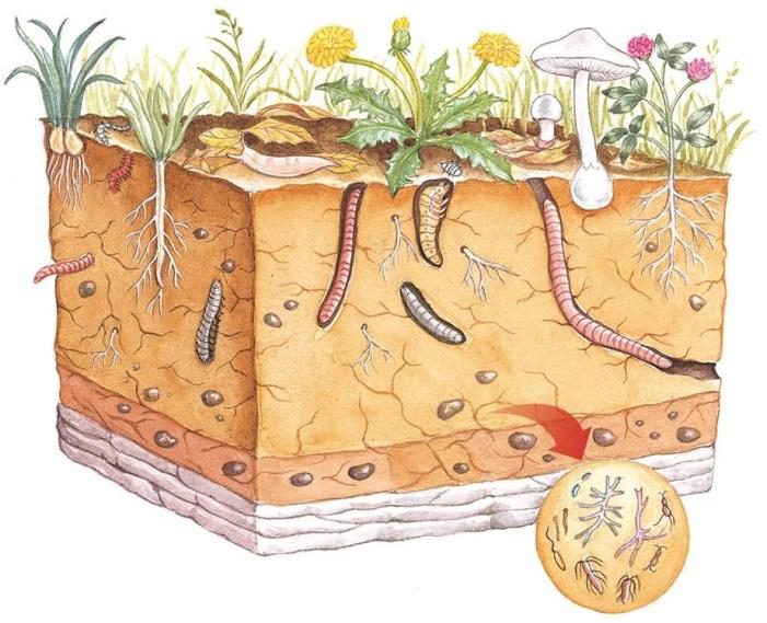 Fatores que influencia na formação do solo