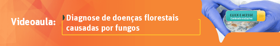 Diagnose de doenças florestais causadas por fungos
