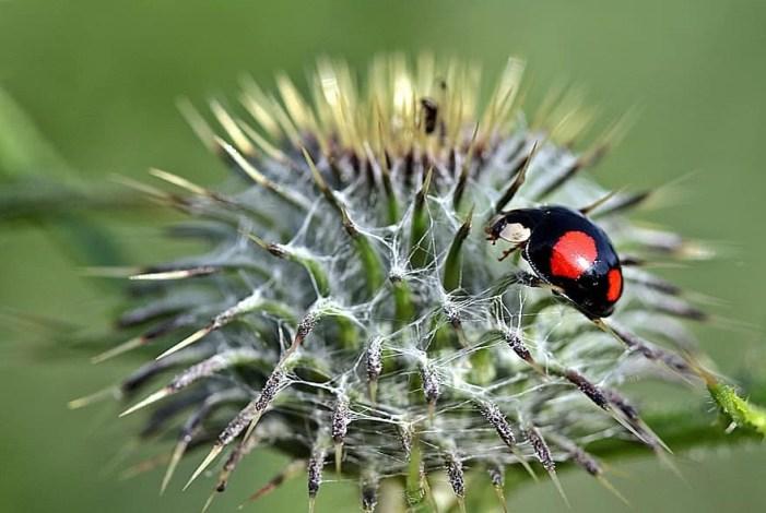 Controle Biológico: como ter lavouras mais sustentáveis e rentáveis!