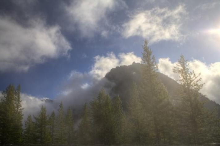 Evaporação de água das florestas