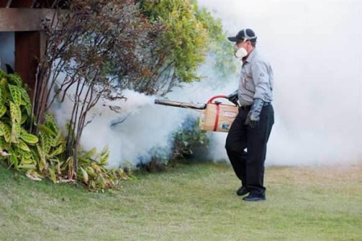 Termonebulização - Combate Formiga Saúva