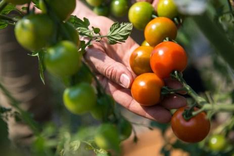 ¿Qué es el metabolismo secundario en las plantas?
