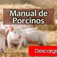 Manual para la producción de Porcinos (PDF)