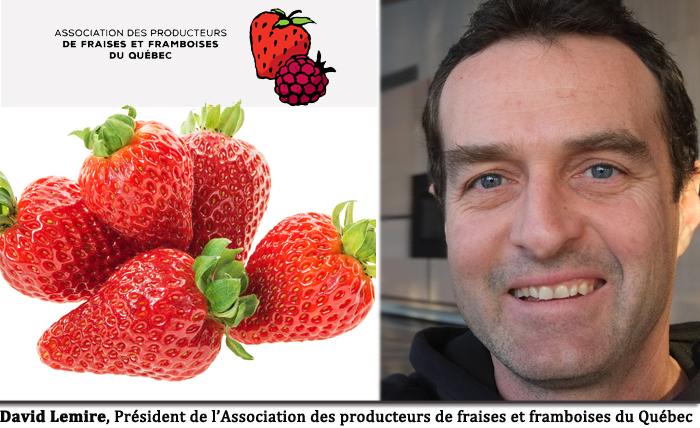 LAssociation des Producteurs de fraises et framboises du Qubec a 20 ans  Agro Qubec