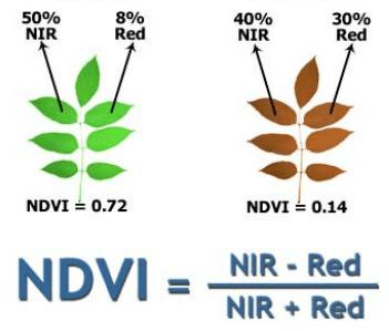 NDVI Exemplo