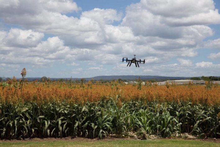 Monitoramento agrícola com drone