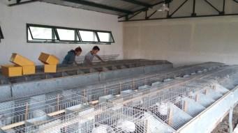 Foto 6: Realizando tareas de limpieza en el galpón de conejos