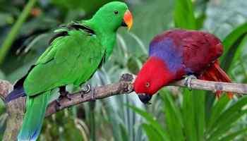 6 Cara Merawat Dan Melatih Burung Nuri Agar Cepat Bicara