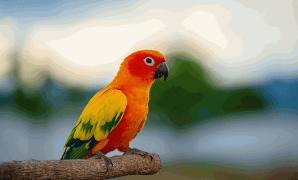 Cara Membedakan Burung Beo Jantan dan Betina