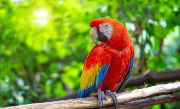 Jenis Penyakit Burung Beo dan Cara Mengatasinya