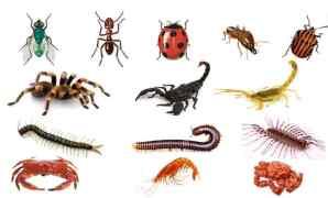 Ciri, Jenis, dan Contoh Arthropoda