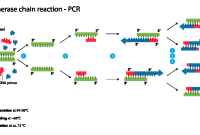 Komponen-komponen Dalam PCR (Polymerase Chain Reaction)