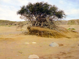desertificacionweb