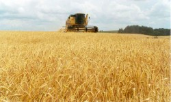 trigo-cosecha-630