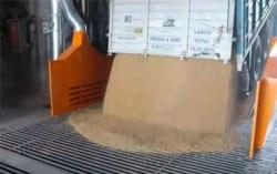Camion-descarga-trigo
