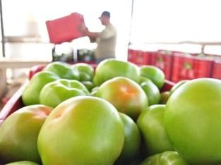 Caja de tomates ensalada