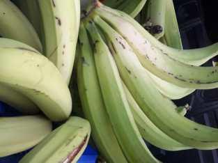 Vendo Plátanos Selectos
