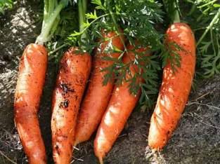 Saco Zanahorias