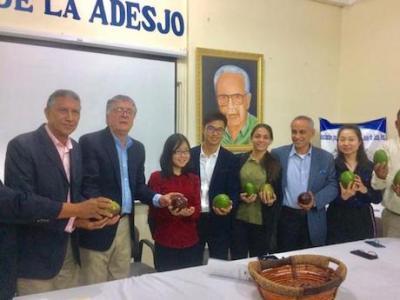 China quiere comprar aguacates dominicanos