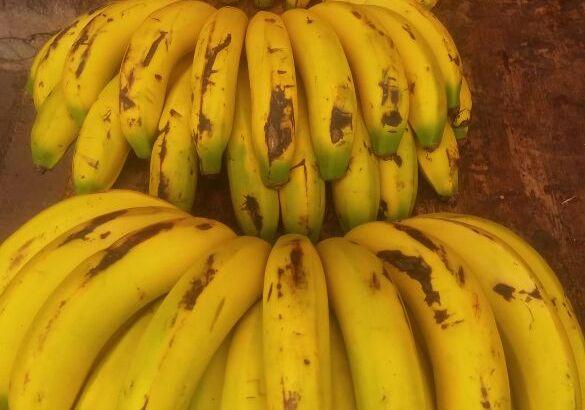 Banano criollo colombiano