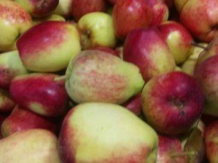 Manzana de agua
