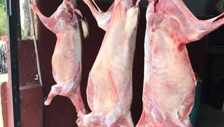 Carne de chivo y ovejo