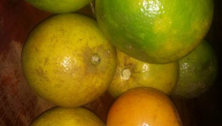 Vendo naranjas agrias