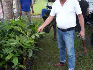 Plantas de pitahaya