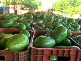 Aguacates al por mayor